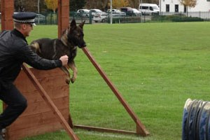 Dog handler taking a police dog over a tall wooden jump