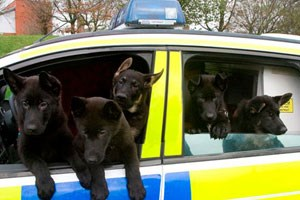 Police puppies in a police car