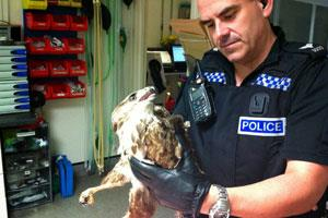 Police man holding a buzzard wearing blue gloves